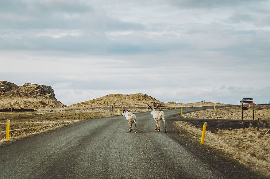 ive-been-capturing-icelandic-roads-for-16-months-6__880