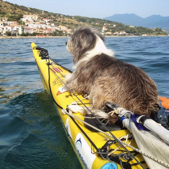 Im-kayaking-along-the-Mediterranean-Sea-since-three-years-and-Im-taking-my-found-dog-with-me-574312ac1f530__700