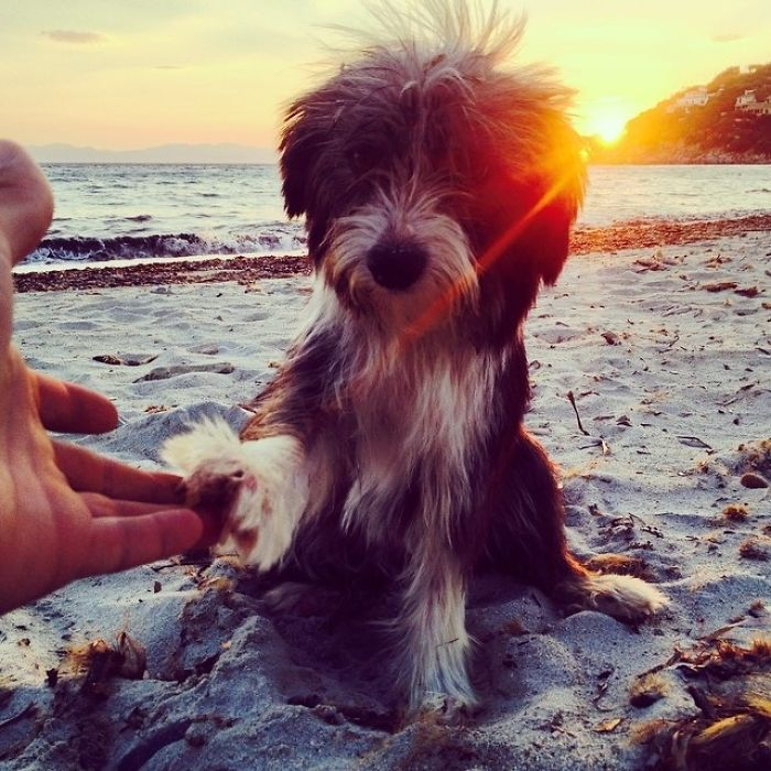 Im-kayaking-along-the-Mediterranean-Sea-since-three-years-and-Im-taking-my-found-dog-with-me-5743132c460f5__700