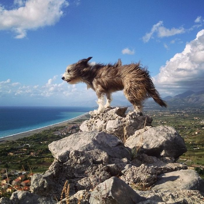 Im-kayaking-along-the-Mediterranean-Sea-since-three-years-and-Im-taking-my-found-dog-with-me-5743135602e04__700